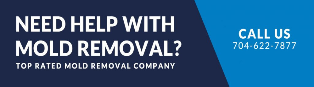 Need Help With Mold Removal?