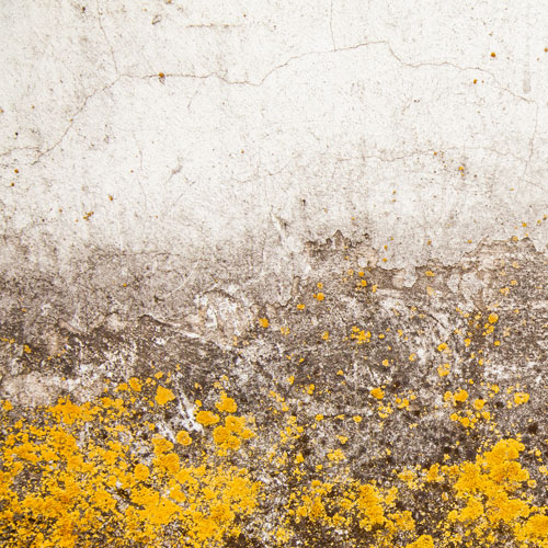 Yellow Mold Removal